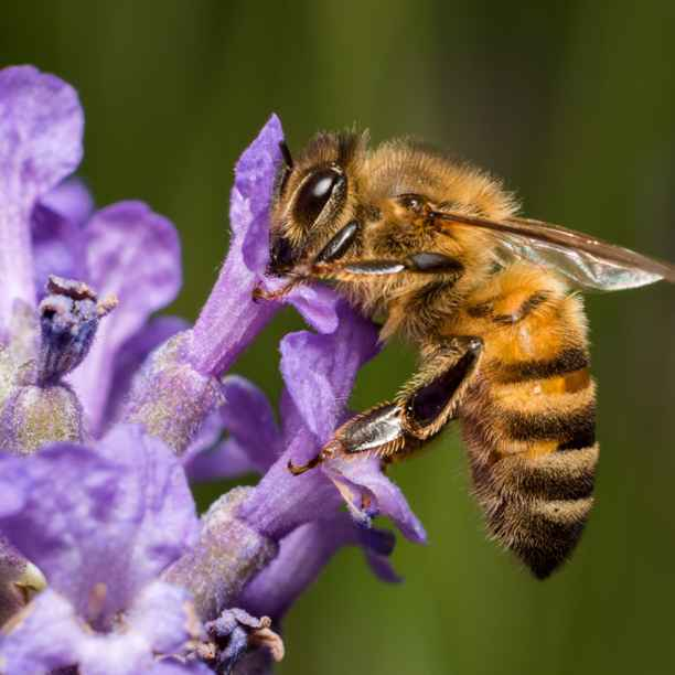 """""""Bienensterben und Höfesterben haben dieselbe Ursache"""""""